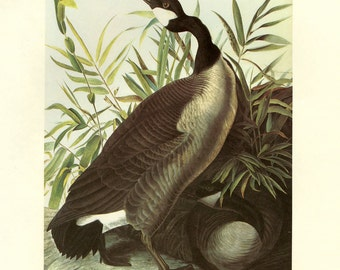 Audubon Goose Print CLEARANCE