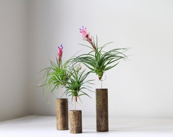 Air Plant with Stand // Modern Home Decor // Plant Decor // Tillandsia Plant Stands