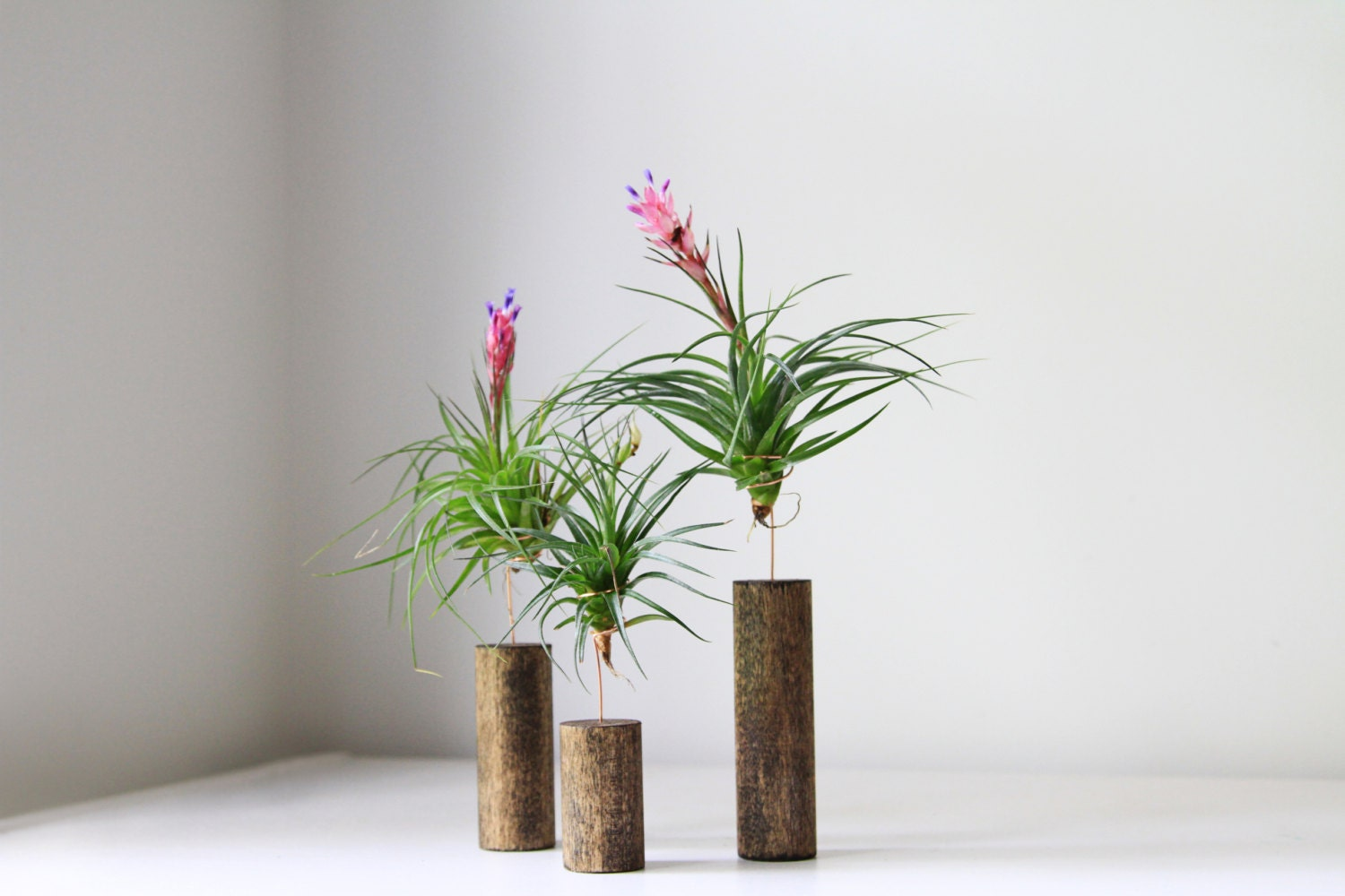 Air plant with stand modern home decor by gemsofthesoil for Air plant decoration