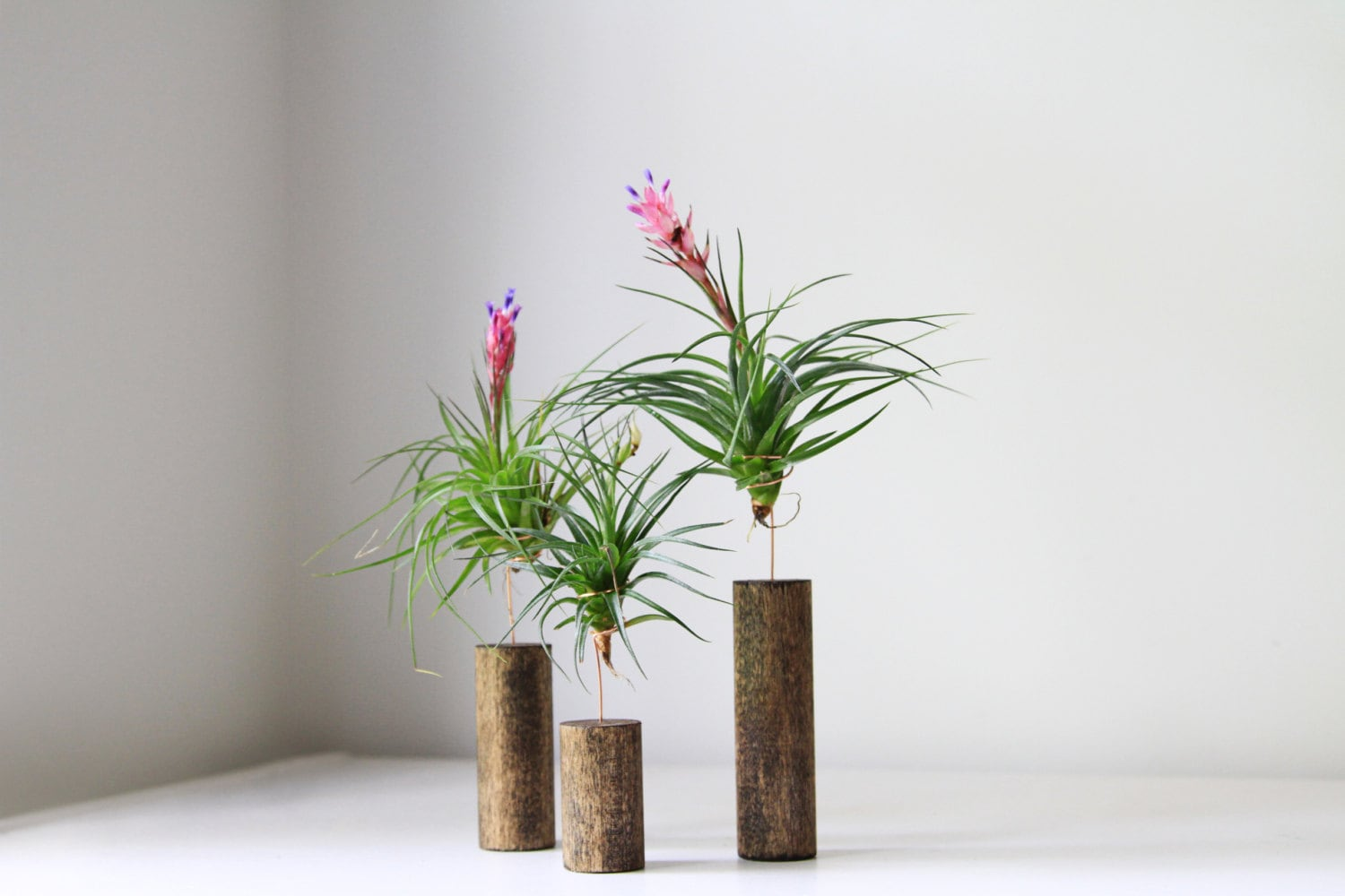 Air plant with stand modern home decor by gemsofthesoil for Home decor with plants