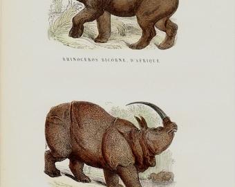 1850 Antique RHINOCEROS print, African rhino and Indian rhino, hand colored,