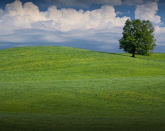Lone Tree on top of a Hill of Green Grass with Cloudy Sky by Byron Center in West Michigan No.00345 A Fine Art Landscape Photograph