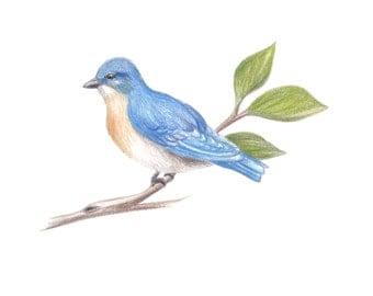 Bluebird, original Illustration
