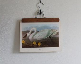 Vintage 1950s Audubon Birds of America Bookplate Print - Whistling Swan
