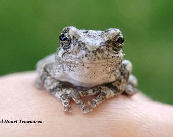 "5x7 Nature Inspired Single Photo Greeting Card or Print--Just Saying Hi--""Smiling Tree Frog""--#103"