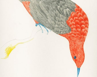 Bird Drawing Fine Art Print Orange Grey Bird