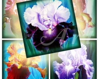 Irises - 20 2x2 Inch JPG images - Digital Collage Sheet