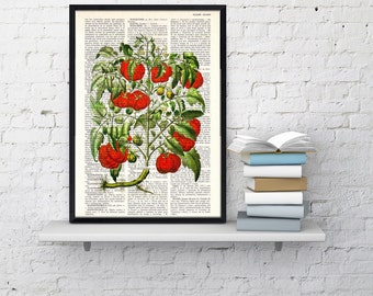 Summer Sale Vintage Book Print Dictionary or Encyclopedia Page Tomato Plant Botanical print on Vintage Dictionary Bookart BFL076