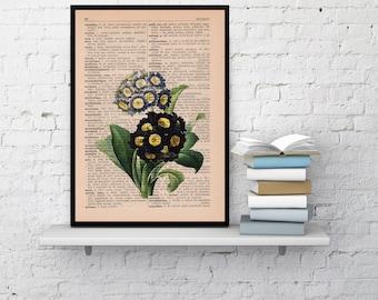 Spring Sale Wall art Vintage Botanical  Illustration English primrose Print on Vintage Book page- Home wall decor BPBB049