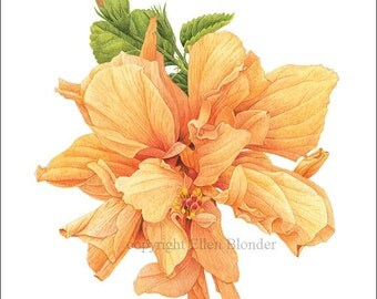 Hibiscus, Large Giclee Print