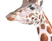 Giraffe Painting -2014- giraffe watercolor painting - print of watercolor painting A3 size largest print