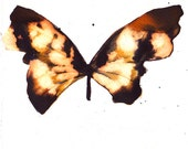 Asia inspired black and gold butterfly original watercolour painting