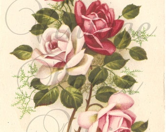 Light & Dark Pink Roses Antique Vintage French Postcard Post Card from Vintage Paper Attic