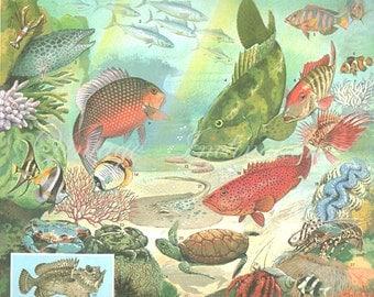 Antique Art Print 1950s, Sea Ocean Fish, color lithograph print bookplate 137