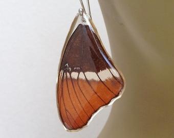 Real Butterfly Wing Earrings. Dangle Sterling Silver Mustard Brown Earrings.