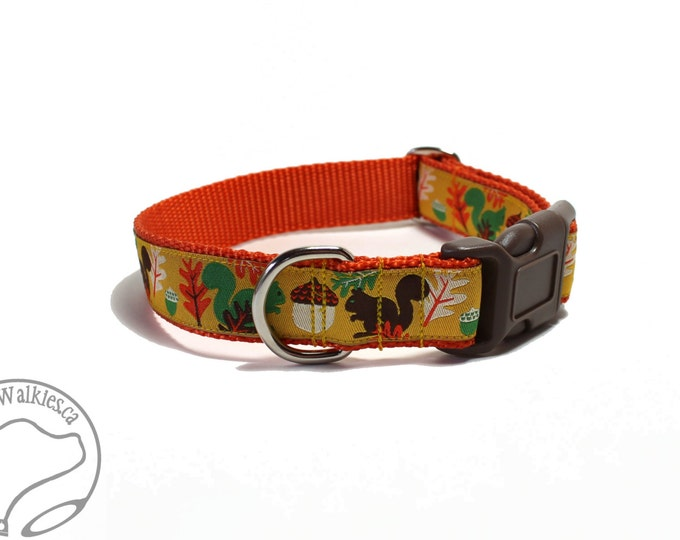"Featured listing image: Nuts for Squirrels on Orange Dog Collar - 1"" (25mm) Wide - Martingale or Side Release - Choice of collar style and size - Fall Dog Collar"