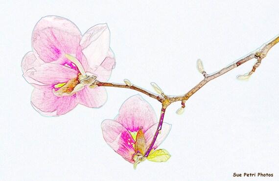 Top Arte fotografica fiori di Magnolia digitalmente migliorato TE23