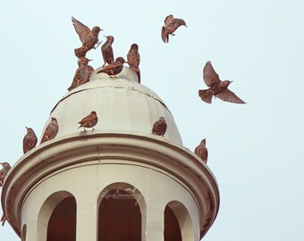 Flock of Birds, Bird Image, Church Steeple, Birds on top of a Church, birds on steeple