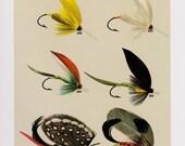 Fly Fishing Print Bass Fishing Flies Lures Print Beach House  Cabin Decor Wall Art Fishing Enthusiast Gift for Fisherman 1793ee