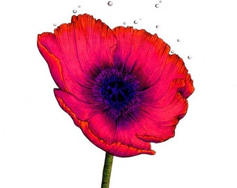 "Red Poppy Print: Digital print of a drawing available 5x7"" or 8x10"""
