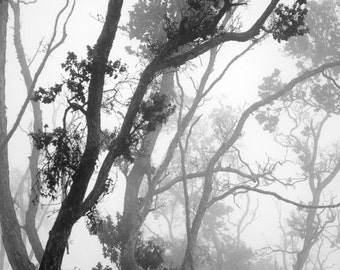 Misty day, Forest photography print, Woods art, Tree photo, Trees print, Black and white photography print, Photography black and white.