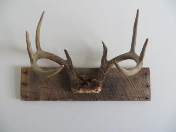 Rustic Vintage White Tail Deer Antler Mount
