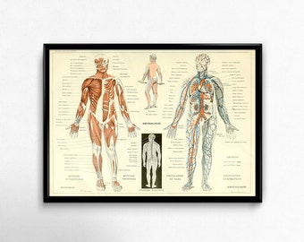 Antique Anatomy Print 1800s Vintage Human Body Poster Science Chart Print Wall Art Decor Body Parts Antique Medical Muscles Nervous System