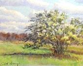 "Original Pastel Landscape Painting - ""Windswept "" by Colette Savage"