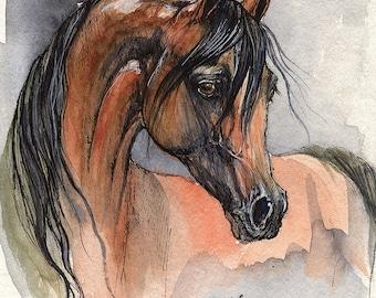 Bay arabian horse, equine art, equestrian portrait,  original pen and watercolor  painting