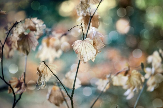 Dried Brown Fall Leaves with Bokeh. Forest Scene. Woodland. Nature Photography by OneFrameStories.