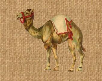 Circus Camel Carnival Full Color Vintage Printable Image INSTANT Download Digital Antique Clip Art Transfer Art Print jpg jpeg pdf png V44