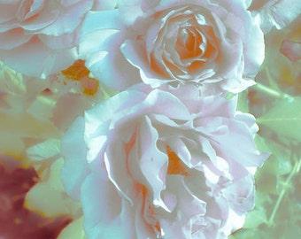Roses Photograph, White Roses, White Flower Print, Feminine Art Print, White And Green, Rose Print, Grandma's Roses by Paula DiLeo_83014