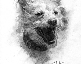 MADE TO ORDER 6x8in pet portrait created by me in graphite.