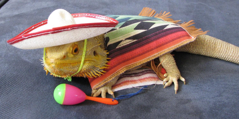 Bearded Dragon Mexican Fiesta Costume By Pamperedbeardies