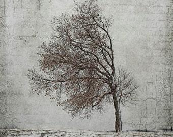 bent tree windblown landscape photography snow winter canvas gallery wrap office decor home decor