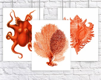 Red Orange Coral Sea Fan Octopus Conch Shell Large Vintage Style Nautical Art Print Set of 3 Natural History Beach House