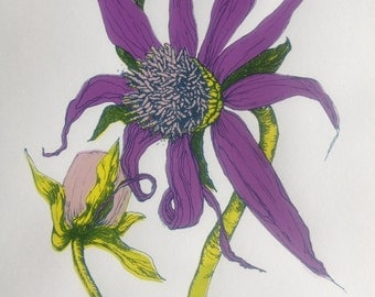 Dahlia Yam Flower - Hand pulled screen print in 4 colours, Limited edition of 8