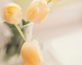 Yellow Tulip Photo 8x8 Print