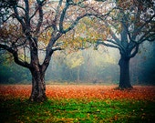 Two Trees, Tangled - Landscape Photography, nature, fall, autumn, fog, mist, colorful