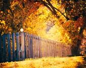 The Light of Autumn - colorful landscape photography - tree - fall foliage - nature photo - fence - morning