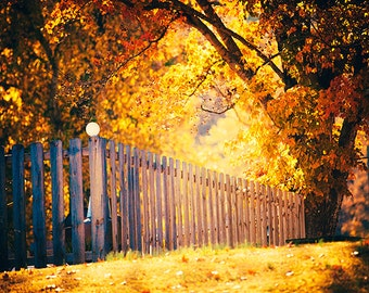 The Light of Autumn - colorful landscape photography - tree - fall foliage - nature photo - fence - morning