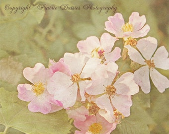 "Wild roses, Nature photo, Pink, Beige, Dreamy, Romantic, Shabby chic, Cottage chic, 8x10, 11x14, 16x20, Wall art, Home decor, ""Wild Roses"""