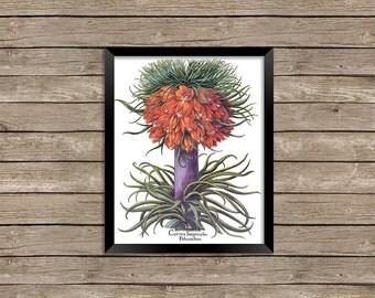 Vintage Botanical Flower Wall Art Printable Digital Prints Instant Download Commercial Use - 8 x 10 inches JPEG & PDF 5-022
