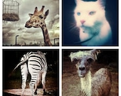 Animal Photo Set - Instagram Note Cards - Giraffe, Cat, Zebra, Alpaca - Llama Photography Prints 4x4