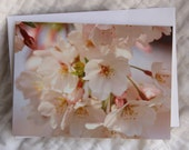 5x7 Washington DC Cherry Blossom Card  Blank Inside  Suitable for Framing  Photo by Shannon M. Johnson  National Cherry Blossom Festival