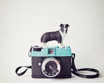Quirky animal camera photo, kids wall art, boys room decor, collie dog photo, nursery wall art animals - The Collie and Diani