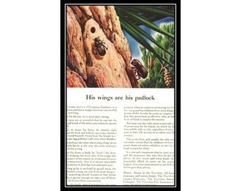 Bark Beetle Artist Andre Maurice Durenceau 1950s Vintage Advertising Nature Wall Art Decor E202