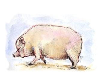 Pig - fine art print Illustration