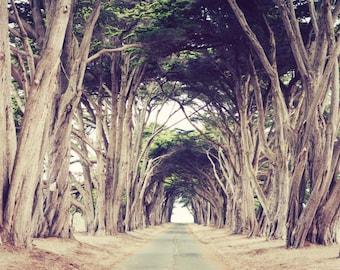 "Landscape photography, neutral brown decor, nature wall art, earthtones, tree wall art, nature photography 11x14 20x24  ""Tree Avenue"""