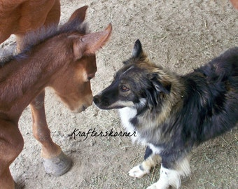 Photo Print Maggie and Oakly Foal and Puppy 4 x 6, 5 x 7, or 8 x 10 Photo Print